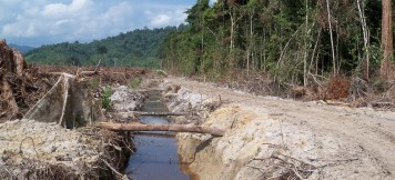Palm oil land being cleared and drained for oil palm plantation in West Kalimantan, Indonesian Borneo