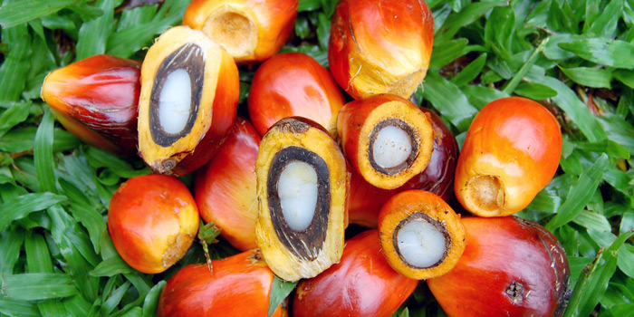 Individual oil palm fruits credit Yadi Purwanto