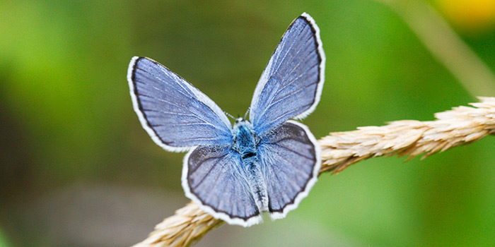 a beautiful blue moth