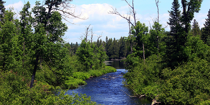 Scenic view of Superior National Forest in summer