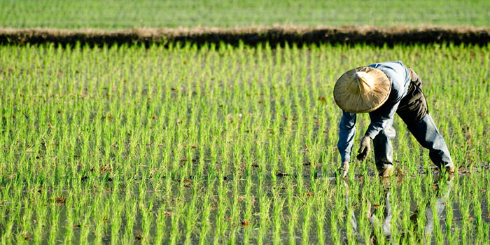 Crop Producer