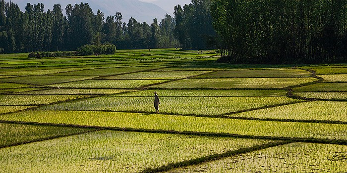 farmer walks in field of crops