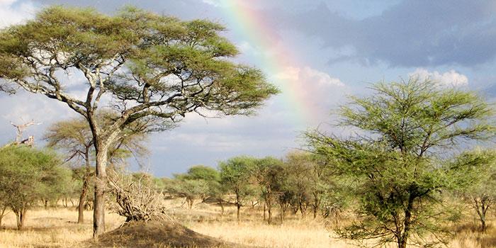 Rainbow over African Sahara in Tarangire