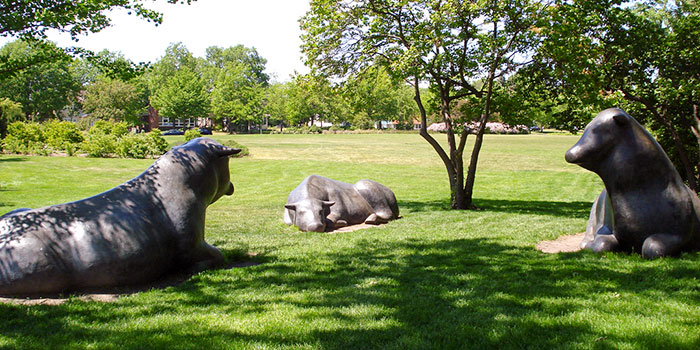 bull statues on the st. paul campus