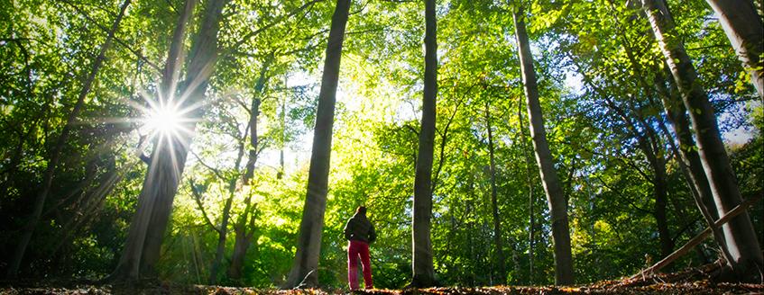 Woman looking up at trees