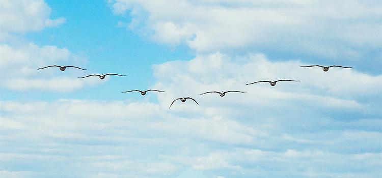 Birds flying in a V formation